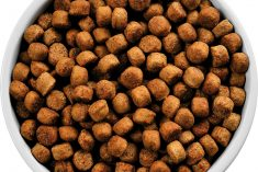 The Benefits and Risks of Raw Dog Food